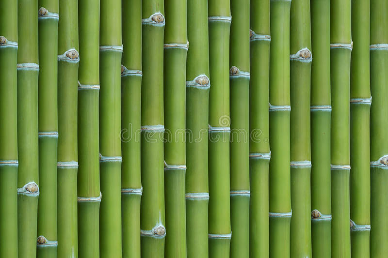 Download Bamboo background stock image. Image of flora, green - 25428287