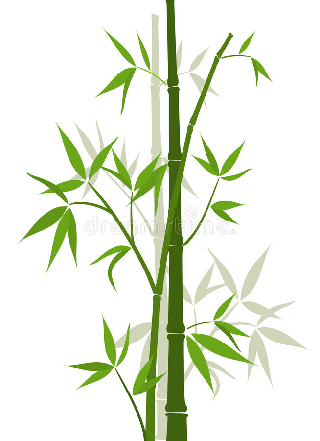 Bamboo background, vector vector illustration