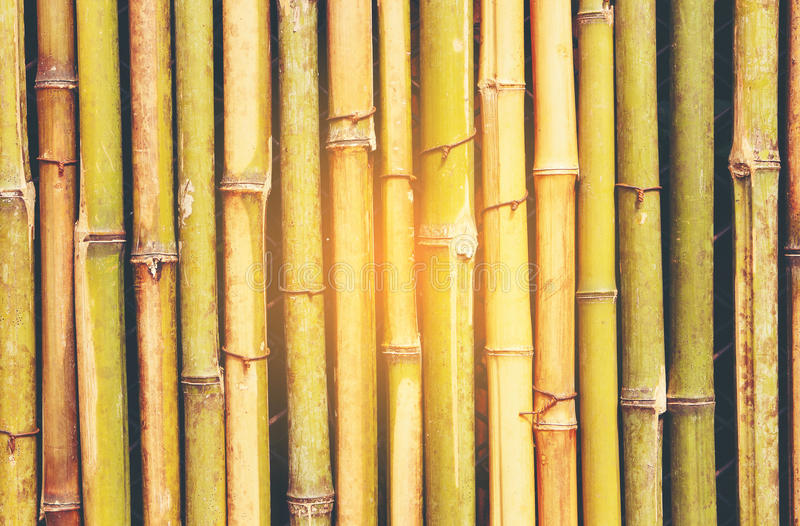 Bamboo background. Wall made of bamboo. Can be used as background stock images
