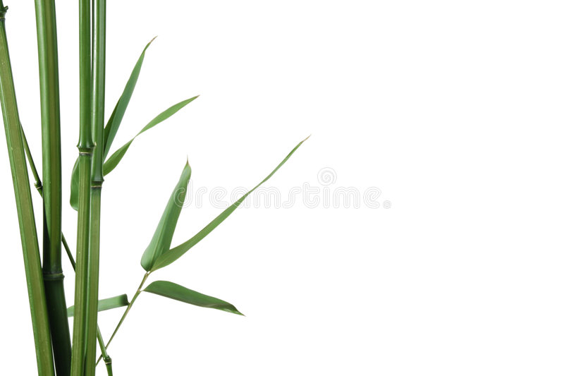 Download Bamboo border stock image. Image of grass, space, twigs - 2666729