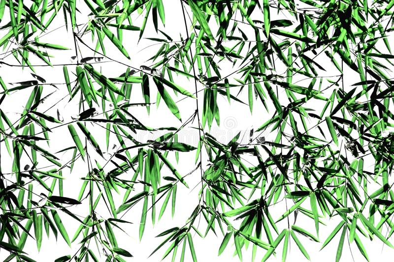 Bamboo Branches with Green Leaves on White Background stock images