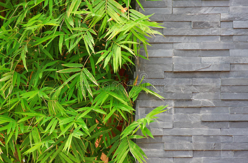 Bamboo and brick wall royalty free stock image