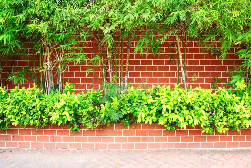 Bamboo and brick wall stock photo