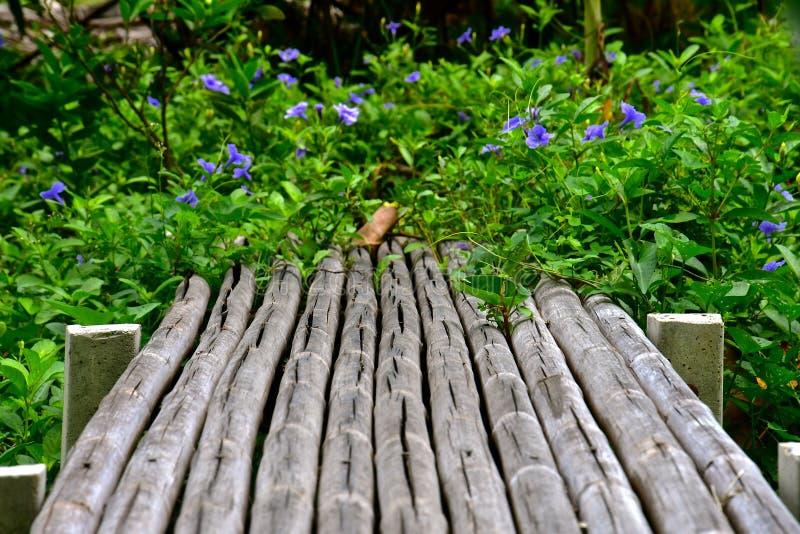 Rustic Bamboo bridge royalty free stock images