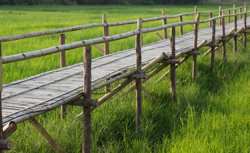 Bamboo bridge with rice field background stock image