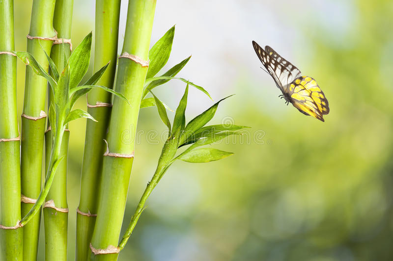 Bamboo and butterfly. Fresh Bamboo and butterfly with nice background royalty free stock photography