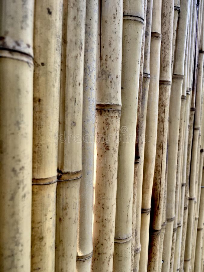 Bamboo cane fence. Perspective. Background royalty free stock images