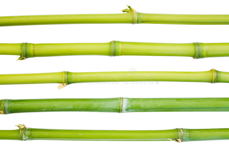 Bamboo canes. Isolated against a white background stock photography