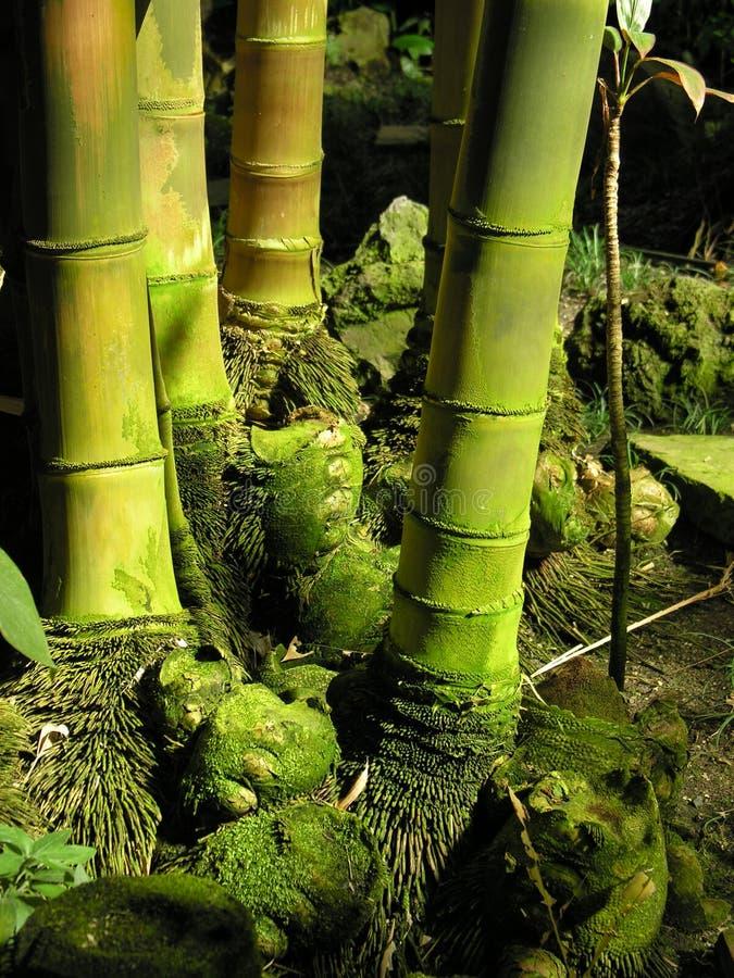 Bamboo canes royalty free stock photo