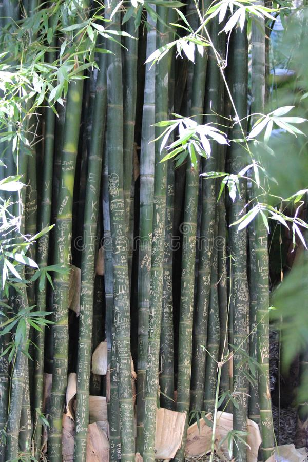 Bamboo Canes. Are great for tying together and creating a screen in the garden. The birds may also make a nest in them stock image