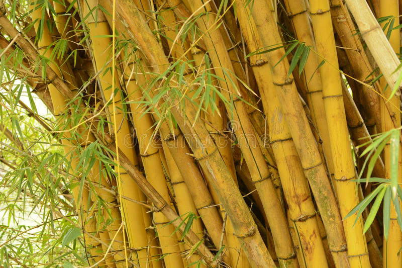 Download Bamboo stock photo. Image of closeup, background, costa - 30893762