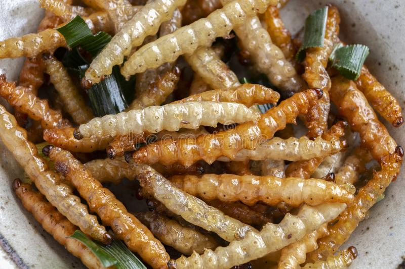 Bamboo edible worm insects crispy or Bamboo Caterpillar in ceramic plate. The concept of protein food sources from insects. It is stock photography