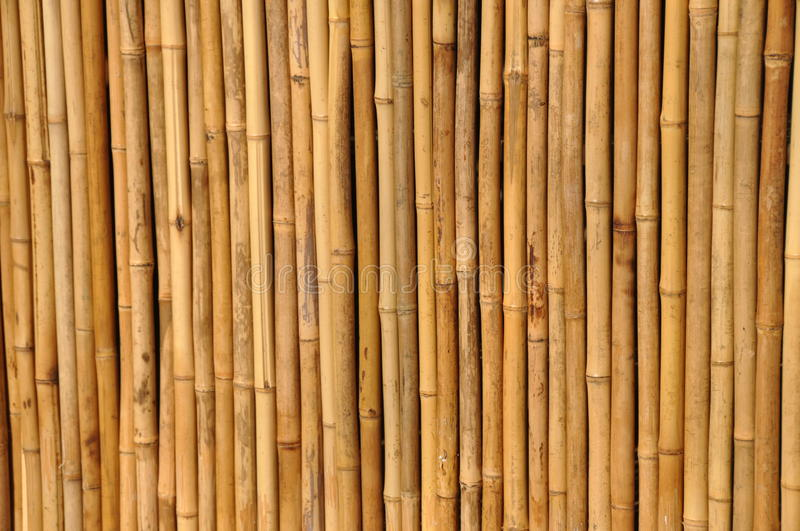 Bamboo fence. As texture with parallel sticks royalty free stock photos