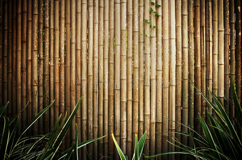 Bamboo fence. A brown bamboo fence with forground foliage stock photos