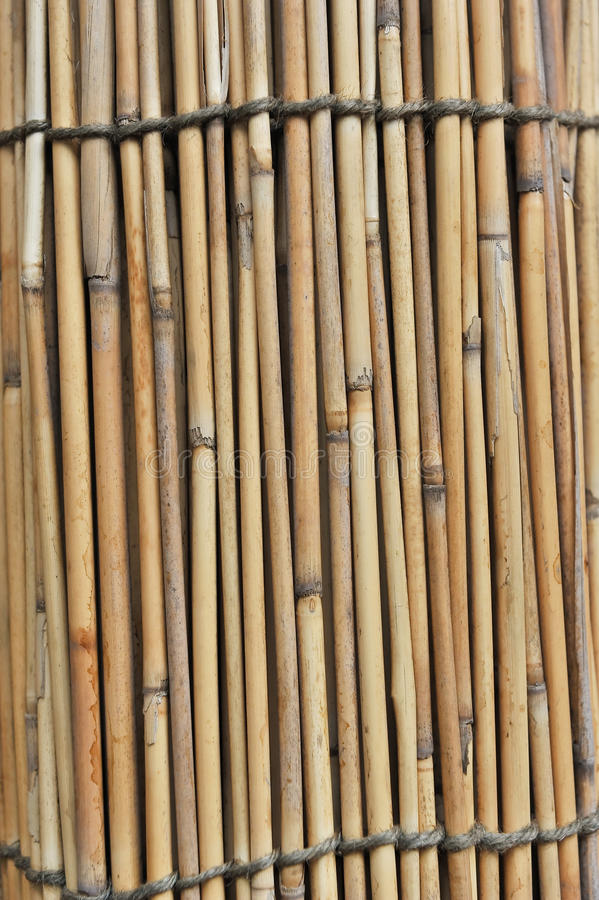 Download Bamboo Fence stock photo. Image of macro, detail, yellow - 20962022