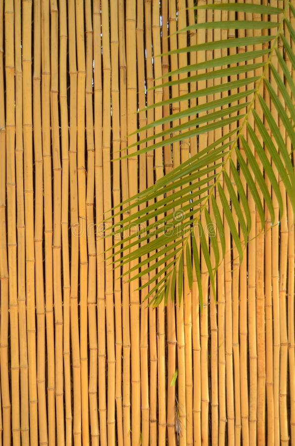 Download Bamboo Fence stock photo. Image of decoration, resort - 23080322
