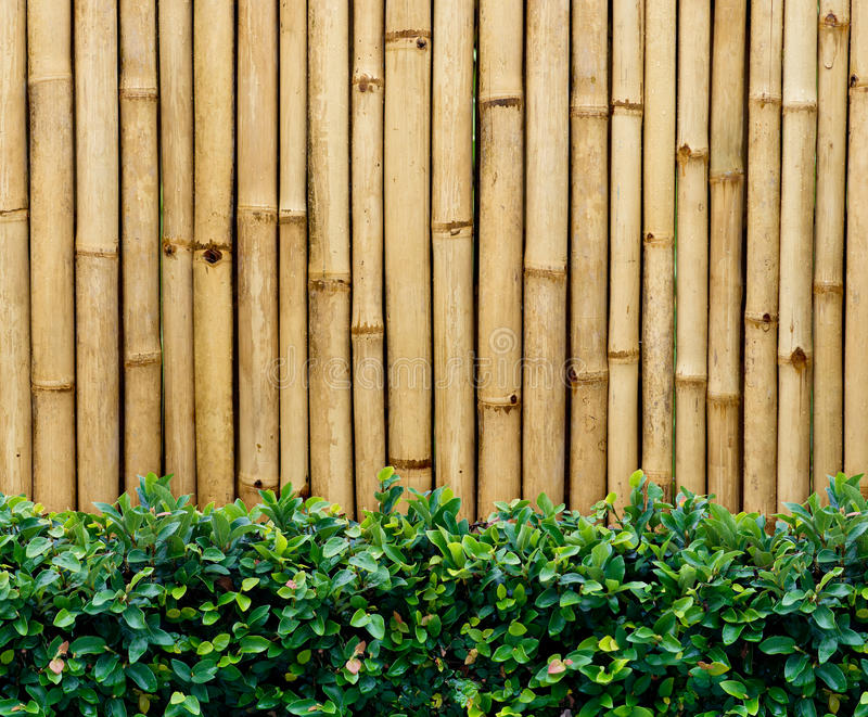 Bamboo fence. After the rain royalty free stock photography