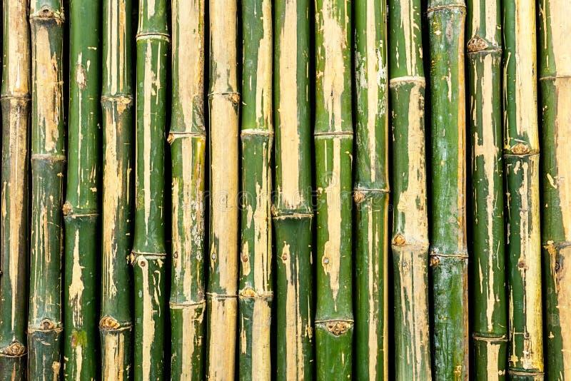 Bamboo fence background stock photos