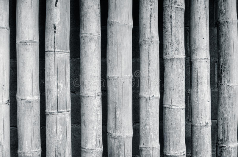 Bamboo fence background. Doi din dang pottery stock image