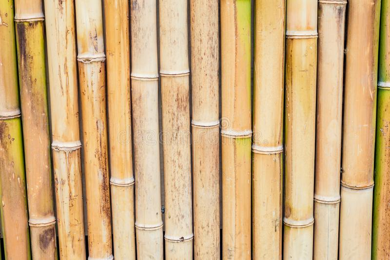 Bamboo fence background. Natural condition stock image