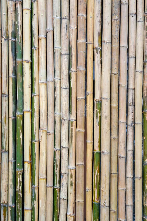 Bamboo fence for background textured royalty free stock image