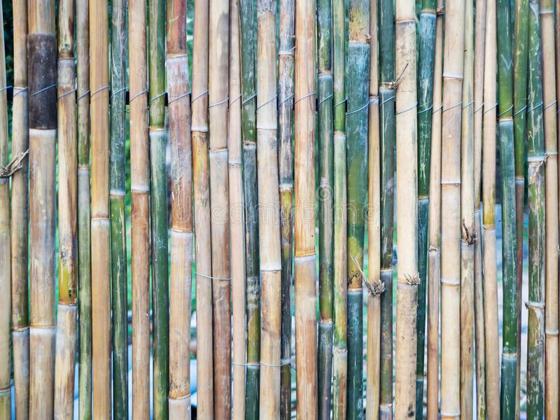 Bamboo fence of green and brown colors, texture, natural pattern, closeup. Bamboo fence of green and brown colors, texture, natural pattern, close up royalty free stock photo