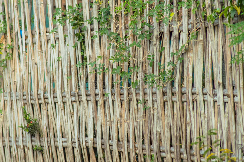 Download Bamboo fence stock photo. Image of wood, wicker, textured - 41179252