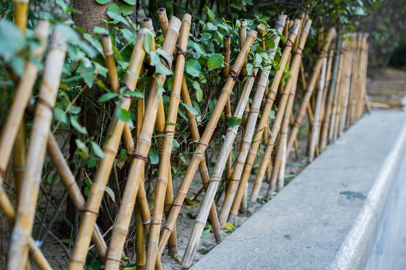 Download The Bamboo Fence Stock Image. Image Of Grassplot, Grass   106672909
