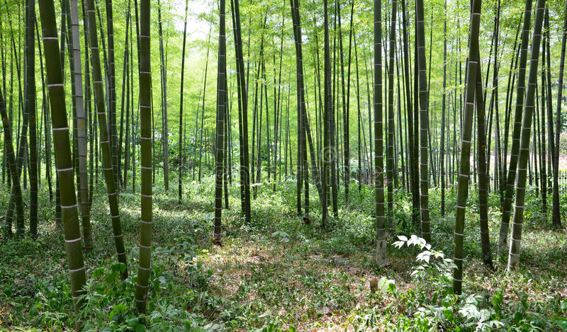 Download Bamboo forest stock image. Image of decoration, background - 19621805