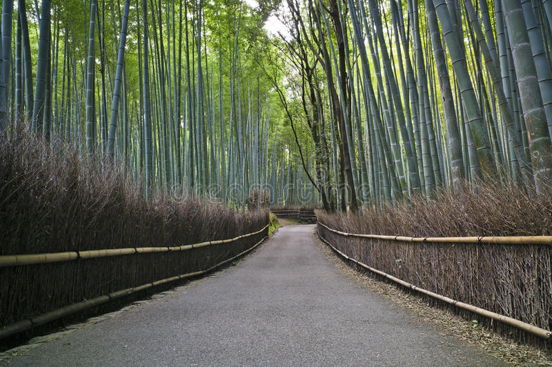 Bamboo forest. In Kyoto, Japan stock photos