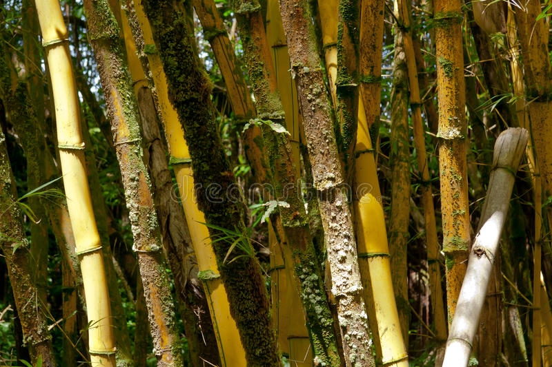 Download Bamboo forest stock image. Image of wood, growing, vegetation - 21948477
