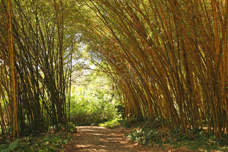 Download Bamboo Forest Stock Image - Image: 27718991