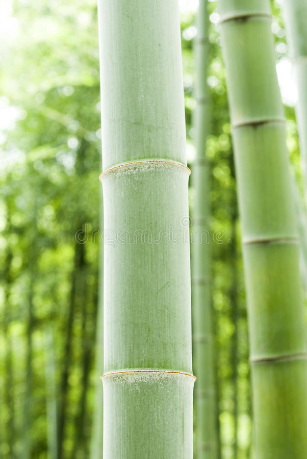 Download Bamboo forest stock photo. Image of feng, garden, foliage - 28909306