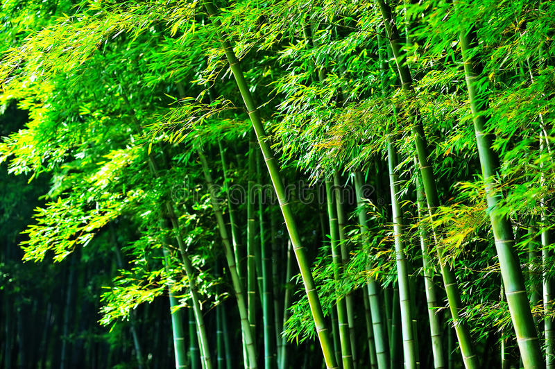 Download Bamboo Forest Royalty Free Stock Image - Image: 29410926