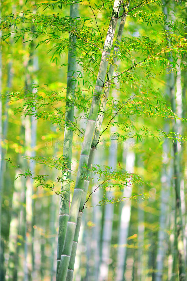 Download Bamboo forest stock photo. Image of impression, light - 29411014