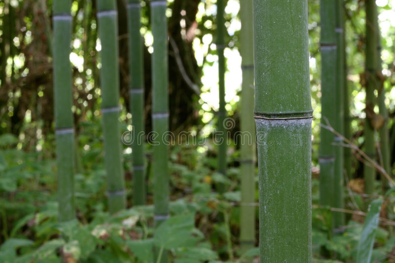 Download The bamboo forest stock photo. Image of asian, environment - 3337634