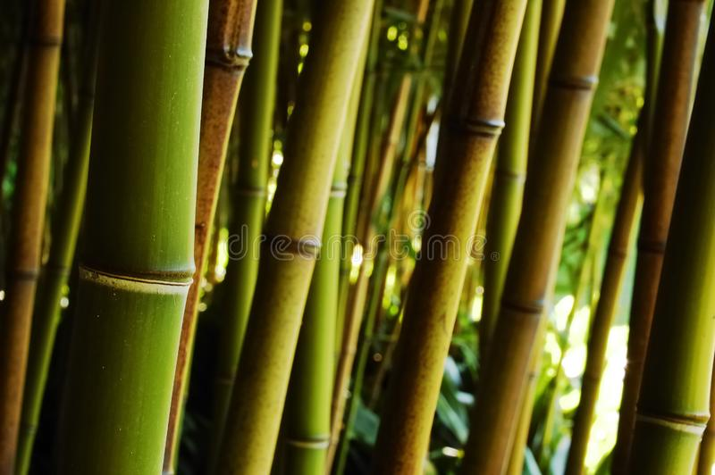 Download Bamboo Forest Royalty Free Stock Photo - Image: 3461285
