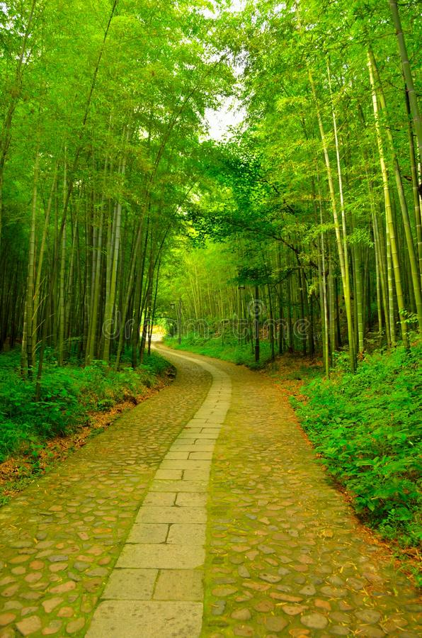 Download Bamboo Forest And Alley Royalty Free Stock Images - Image: 28097889