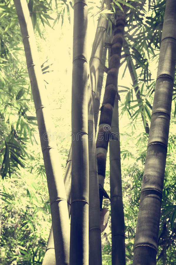 Download Bamboo forest stock image. Image of light, aged, bamboo - 38740679