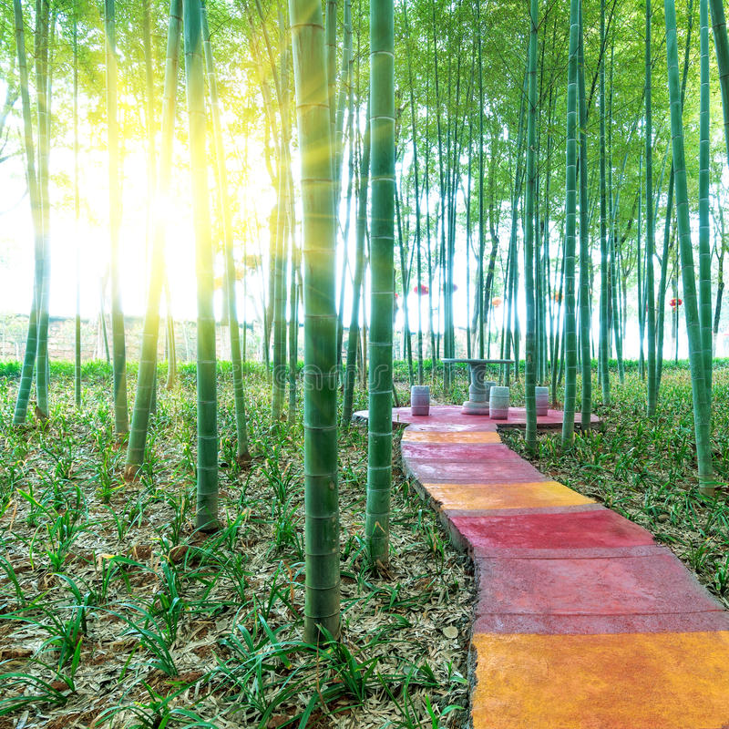 Download BAMBOO FOREST by China stock image. Image of abstract - 26834229