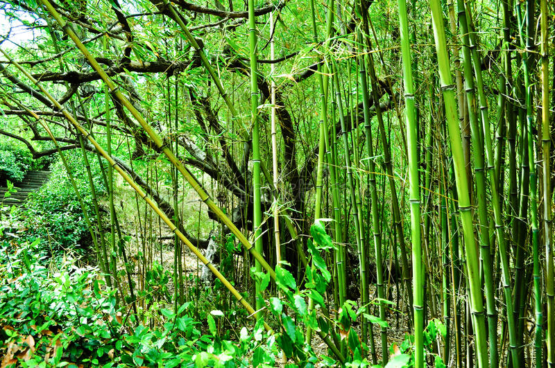 Download Bamboo forest stock photo. Image of calm, beam, lush - 39500546