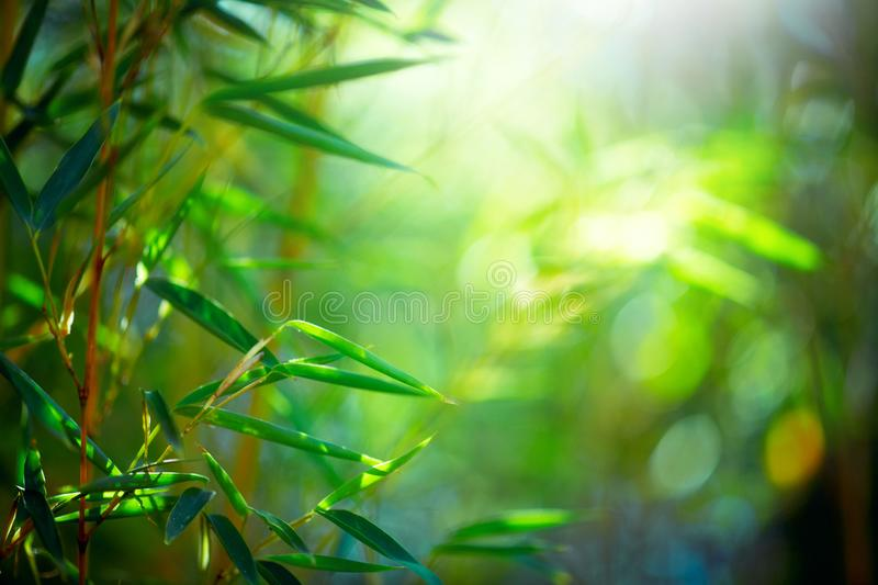 Bamboo Forest. Growing bamboo border design over blurred sunny background. Nature royalty free stock photo