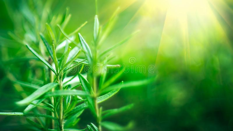 Bamboo forest. Growing bamboo border design over blurred sunny background stock images