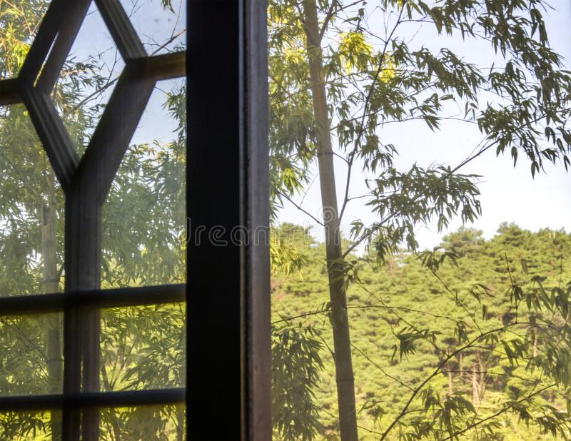 Bamboo forest in Huangshan stock images