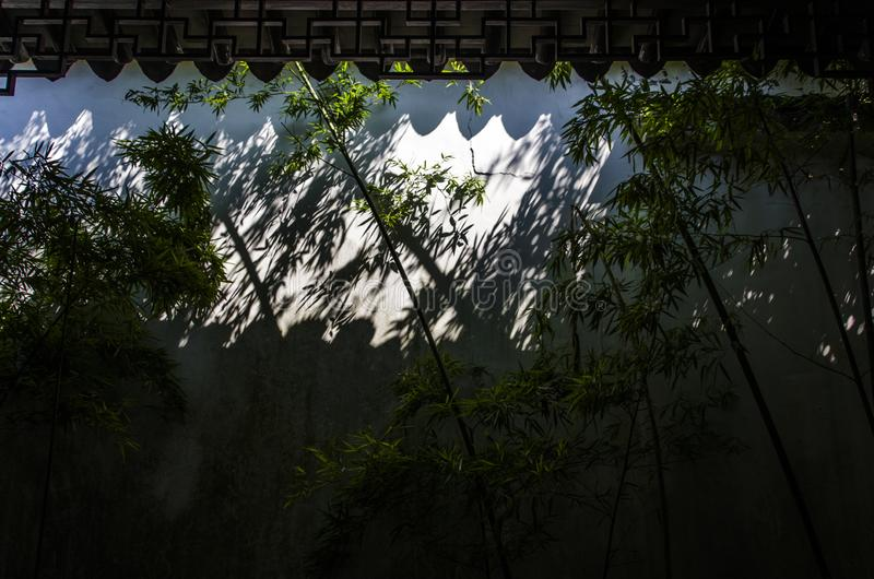 Bamboo forest in Huangshan. Deep in the bamboo forest of Huangshan Mountain, Bamboo forest ecotourism is an important constituent of Chinese forest ecotourism royalty free stock photography