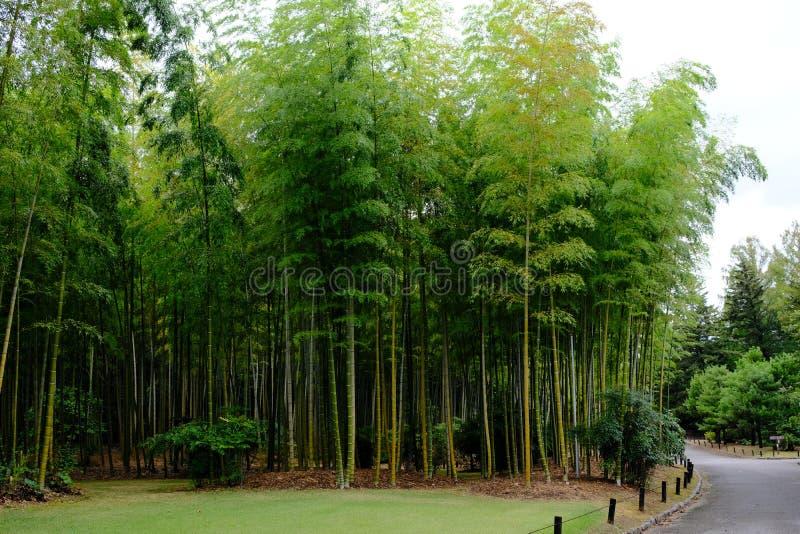 Bamboo forest inside Japanese Garden of Expo Commemoration Park. In Osaka, Japan royalty free stock photo