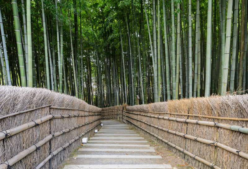 Bamboo forest in Japan stock photos