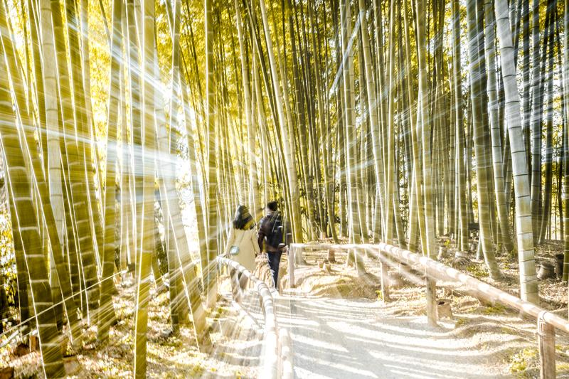 Bamboo Forest Effect royalty free stock image