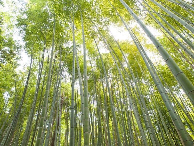 Download Bamboo Forest At Kyoto Arashiyama Area Stock Photo - Image of outdoor, japanese: 26792848