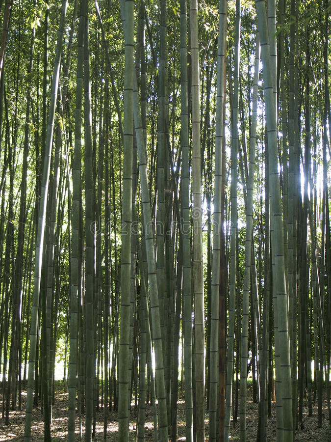 Download Bamboo Forest stock image. Image of forest, destination - 83714579